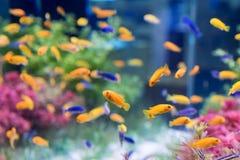 fiskar tropiskt Arkivfoto