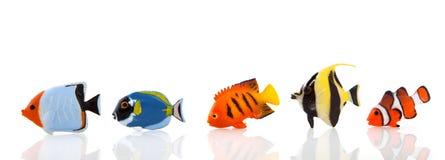 fiskar tropiskt Arkivfoton