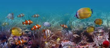fiskar tropiskt Arkivbild