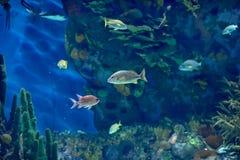 fiskar tropiskt undervattens- för bild Arkivbilder