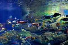 fiskar tropiskt undervattens- för bild Royaltyfria Bilder
