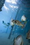fiskar tropiskt undervattens- för livstid Royaltyfri Bild
