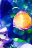 Fiskar - undervattens- liv Fotografering för Bildbyråer