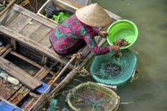 Fiskare kvinna i Vietnam Arkivbilder