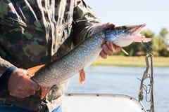 Fiskare med en pike arkivfoton
