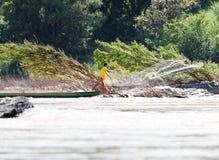Fiskare med netto på Mekong Royaltyfri Foto