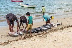 Fiskare och den stora tonfiskfisken på tamarinen sätter på land Arkivbild