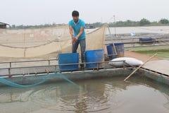 Fiskare och fisklantgård i floden Arkivfoton