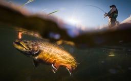 Fiskare och forell Royaltyfria Bilder