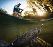 Fiskare och forell, undervattens- sikt royaltyfri bild