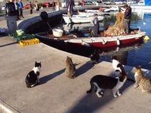 Fiskare och katter på Cavtat, Kroatien fotografering för bildbyråer