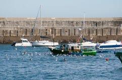 Fiskare och seagulls royaltyfri fotografi