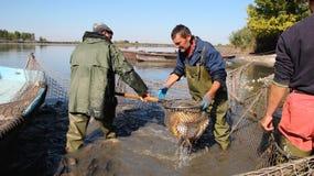 Fiskare på arbete royaltyfria foton