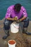 Fiskare på arbete Arkivfoton