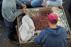 Fiskare på arbete Fotografering för Bildbyråer