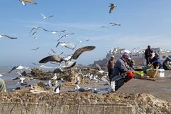 Fiskare på den Essaouira stärkte staden Royaltyfri Foto