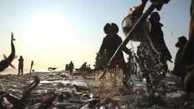 Fiskare som arbetar med många fiskar royaltyfri fotografi