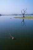 Fiskare som netto använder för att fånga fisken royaltyfri fotografi