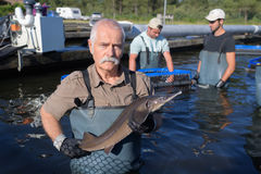 Fiskare som poserar den hållande fisken Arkivfoto