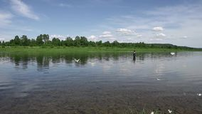 Fiskarefiske i en lugna flod i morgonen Man i fiskekugghjulet som stending i en flod och kast en fiskepol arkivfilmer