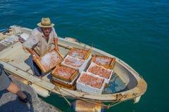Fiskaren lastar av fisken efter en dag av arbete, det Genua landskapet, Ligurian riviera, Italien fotografering för bildbyråer
