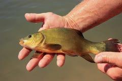 Fiskaren rymmer en fisk arkivbilder