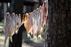 Fiskares dröm Arkivbilder
