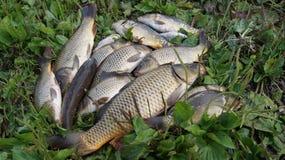 Fiskares lås Royaltyfria Foton