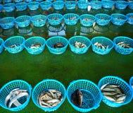 Fiskauktion i Taiwan Arkivfoto