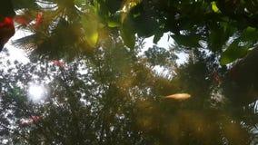 Fiskbad i dammet Blanes Spanien, botanisk trädgård lager videofilmer