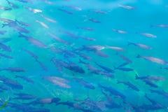 Fiskbakgrund för blått vatten Royaltyfri Foto