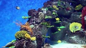 Fiskbehållare med den färgrika fisken, bosatta koraller lager videofilmer