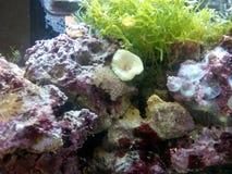 Fiskbehållare med vattenorganismer royaltyfri foto