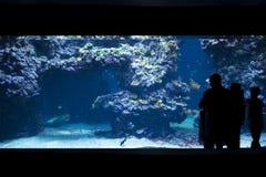 Fiskbehållare på det oceanografiska museet Monaco Fotografering för Bildbyråer