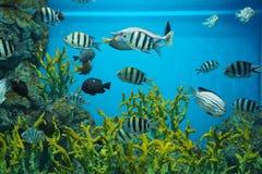 Fiskbehållare Arkivfoto