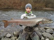 Fiske för Donaulaxhucho i Centraleuropa arkivfoton