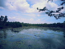 Fiske Lake Arkivfoto