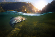 fiske Närbilden stängde sig av en fiskkrok under vatten Arkivfoto