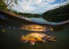 fiske Närbilden stängde sig av en fiskkrok under vatten Royaltyfria Bilder