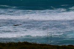 Fiske Poles och havet 2 Arkivfoton