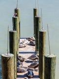 Fiske Poles och pelikan Royaltyfria Bilder
