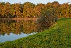 Fiske sjö på en solig höstdag Härliga reflexioner av träd i vattnet Fotografering för Bildbyråer