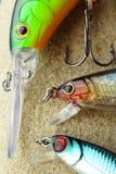 Fiske tre lockar closeupen royaltyfria foton
