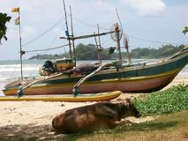 Fiskebåt i Sri Lanka Royaltyfria Foton
