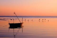 Fiskebåt och fågelflugan med solnedgång Royaltyfria Bilder