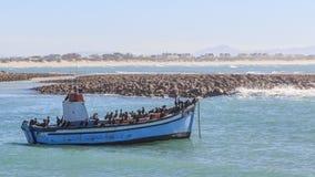 Fiskebåt och kormoran Arkivbilder