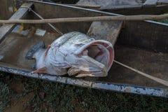 Fiskebåt på Nigeret River, Niger fotografering för bildbyråer