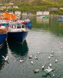 Fiskebåtar och seagulls, Isle av Skye. Arkivbild