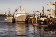 Fiskebåtar på bundet i Aucklands viadukthamn arkivbild