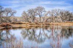 Fiskedammet flankeras av Bare träd i denna sceniska vinter Royaltyfri Bild